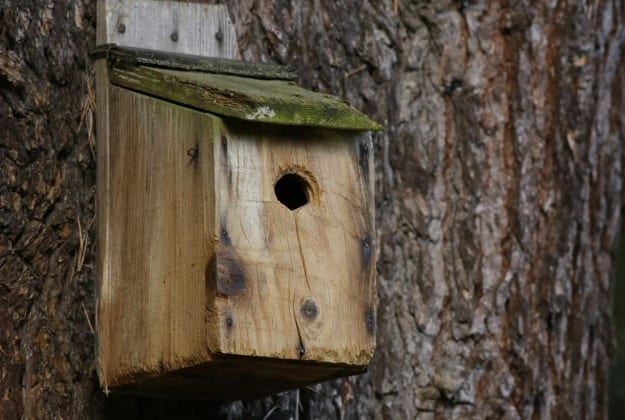 Make Your Own Birdhouse…With At Sarah's House
