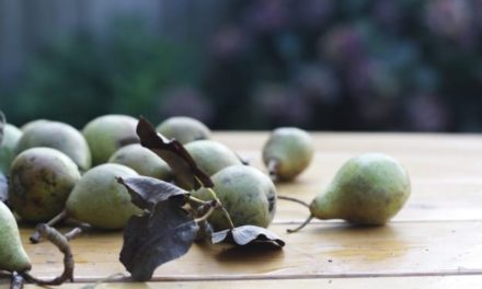 December treats from the garden and beyond
